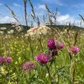 Biodiversity Net Gains