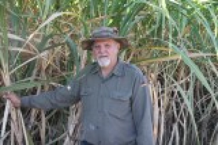 man in a cane field