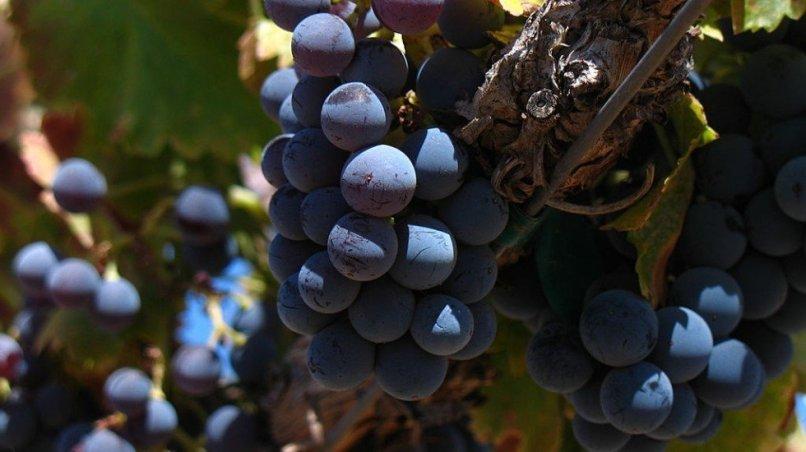 Domaine de Montebio - découvrez les saveurs de notre vin bio AOC Minervois