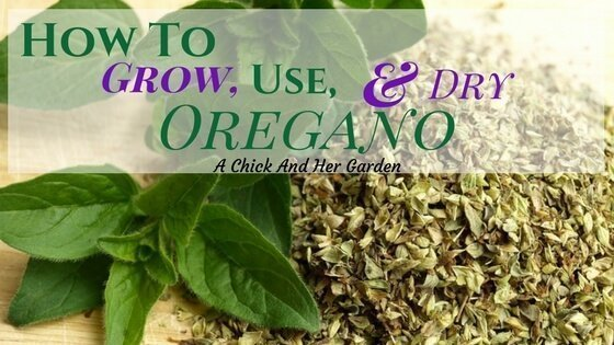 How To Grow, Use, and Dry Oregano