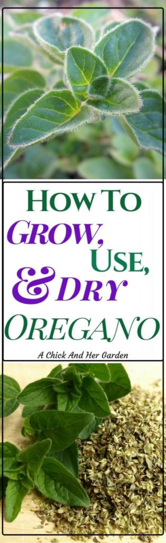 Oregano is not only an awesome addition to our food, but also has baffling health benefits! Check out how to grow oregano and why you should!