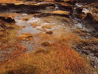 Marsh plants in the winter