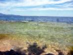 Trevis im Wasser