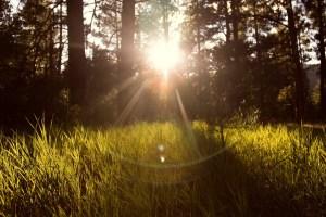 sunlight-867222_1280