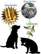 Pet Dander Allergy Solutions - Pet Allergies - AchooAllergy.com
