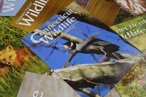 Connecticut Wildlife magazine covers