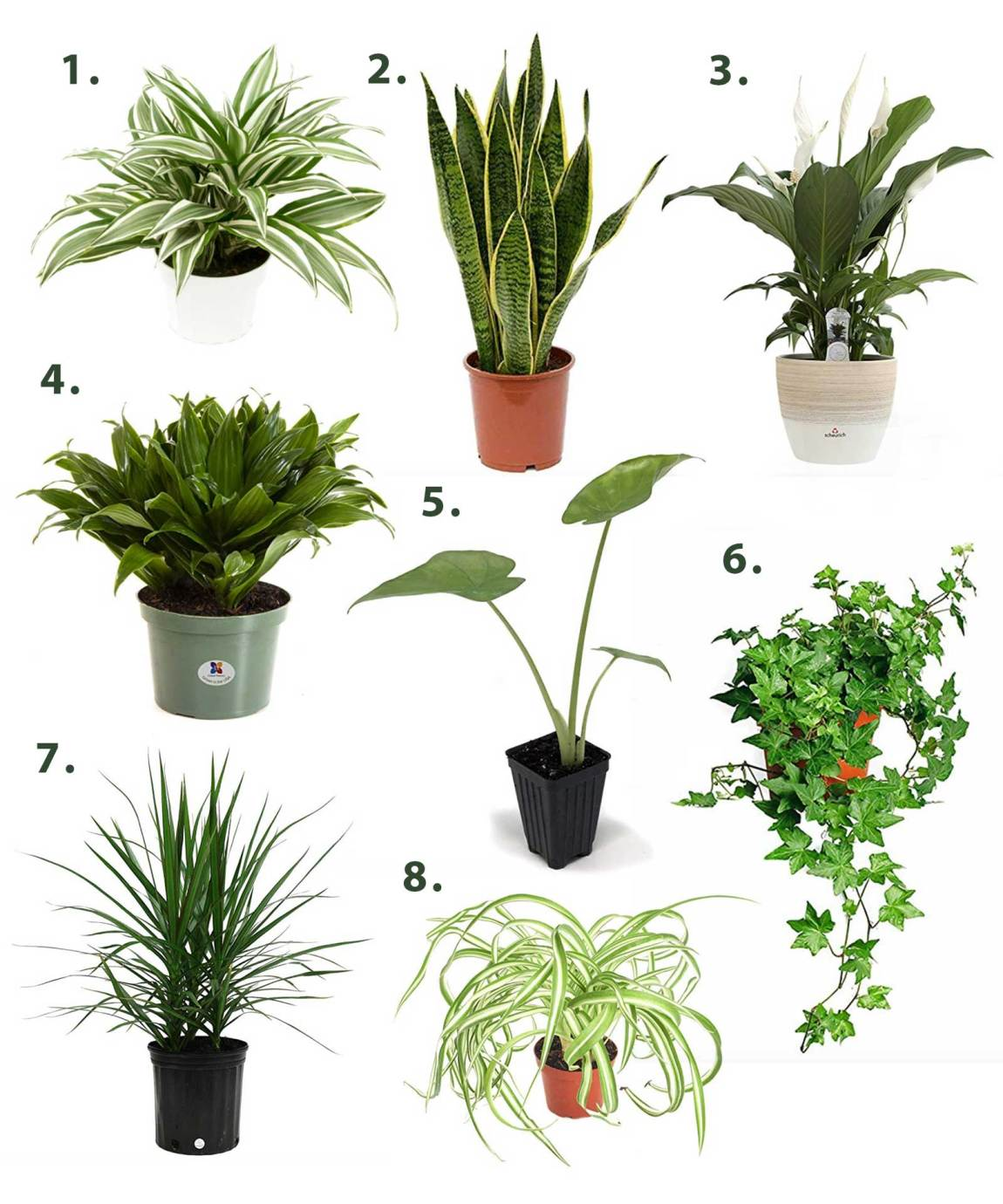 Air purifying houseplant options
