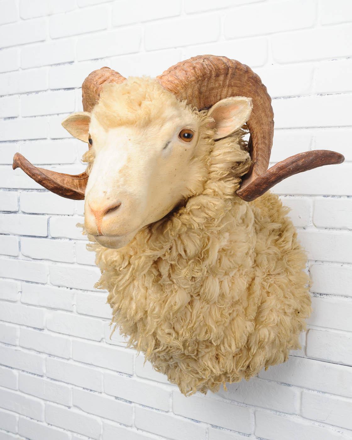 Tx056 Baron Sheep Prop Rental