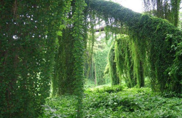 0825-bosque-cuba1.jpg