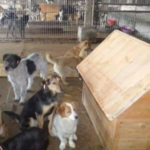 ESTELLE - Adoptie honden - A comfort zone for animals