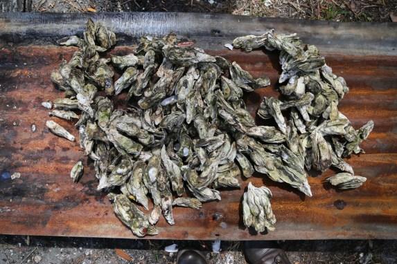 oysterroast-5