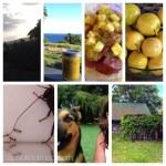 365 Project 2014 – week 35