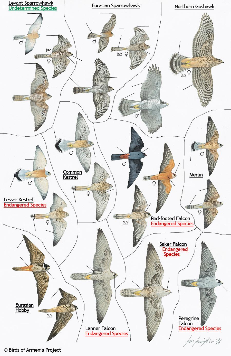 backyard bird identification outdoor furniture