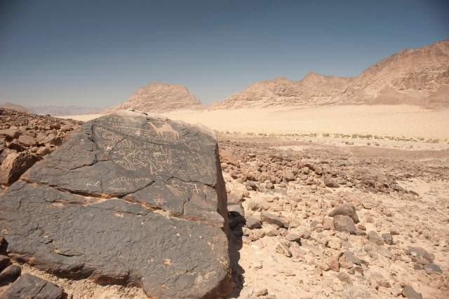 This boulder near the southern end of Wadi Hafir features more than a dozen inscriptions, including one that large drawing of a camel that dominates the stone's upper face (photo by Michael Fergusson)