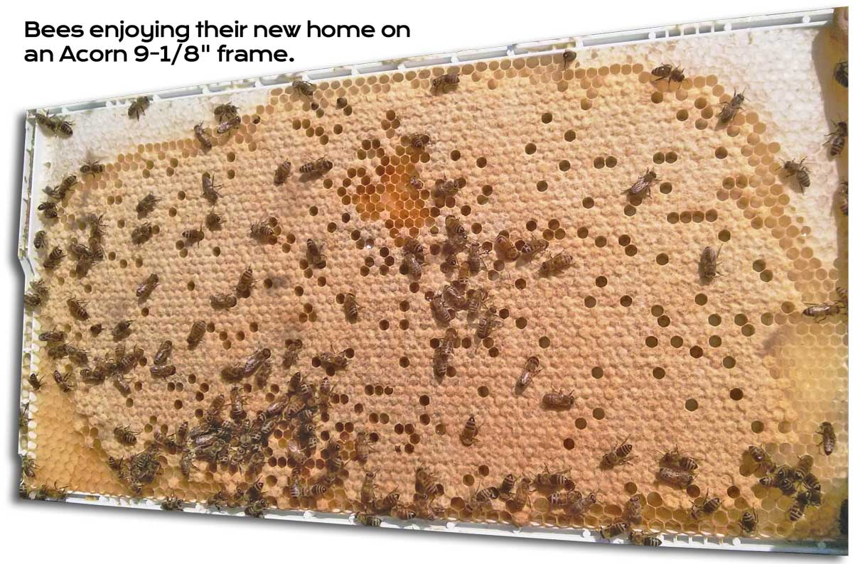 Bees-on-Comb