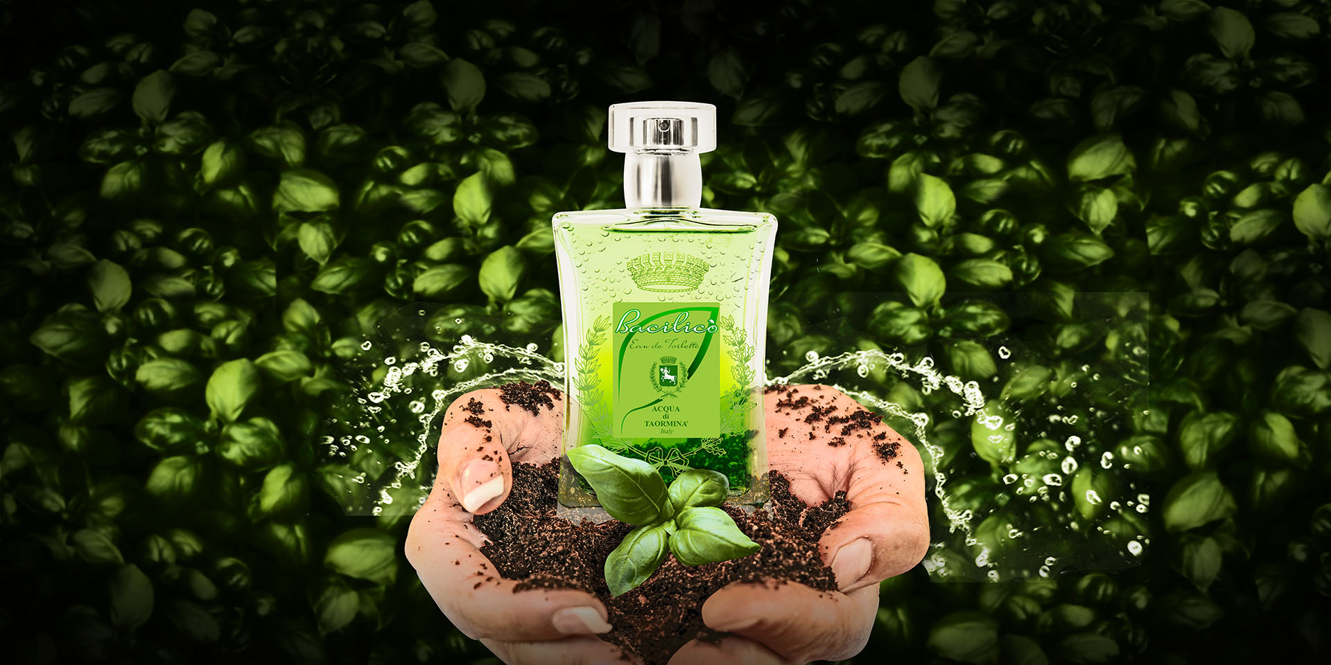 Acqua di Taormina parfums bacilico_slide1 Bacilicò - Bacilico