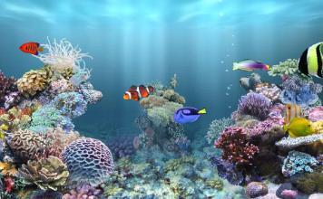 acquario marino