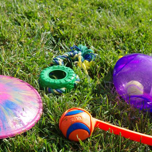 pet-daycare-toys