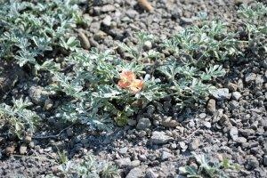 wildflower-in-grasslands-np