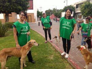 adopton-perritos2-300x225