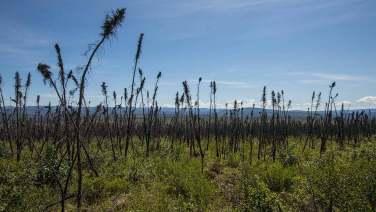 Vor dem Waldbrand waren wir Bäume...