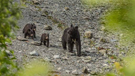 Bärenfamilie, so wie man sie (nicht) sehen will.