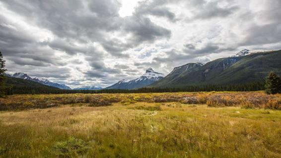 Im Flusstal nähe Banff ist der Herbst eingezogen.