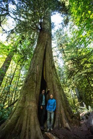 Die Bäume sind zum Teil über 800 Jahre alt.