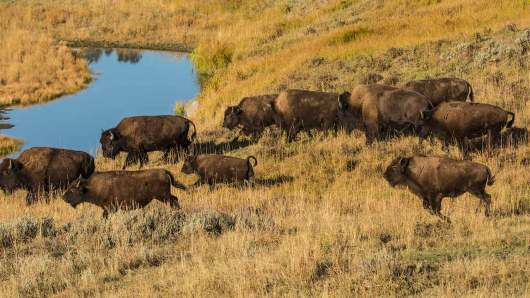 YellowstoneNP-1153.jpg