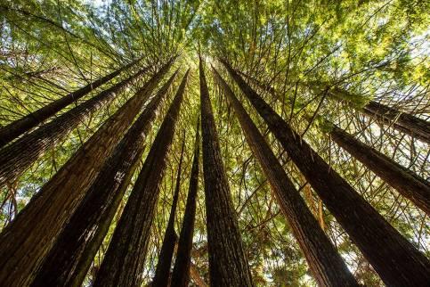 Redwood-Impression.