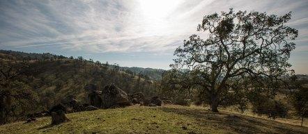 Die Sierra Foothills überraschen uns mit wunderschönen geschwungenen Hügellandschaften.