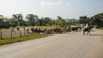 Cowboys in Guatemala: erinnert an eine Alp-Abfahrt.