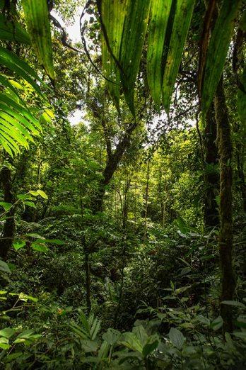 Dschungel in Monteverde.