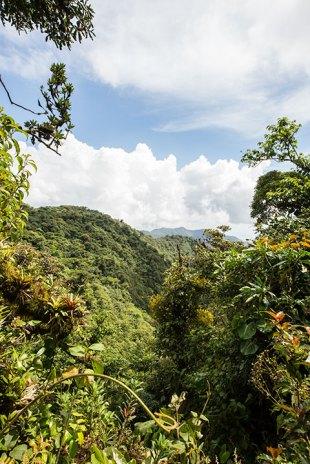 Blick über das Dschungeldach.