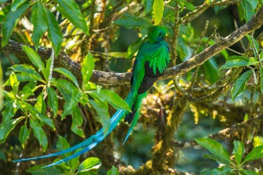 Welch ein Glück: ein Quetzal!