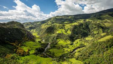 Grün. Grüner. Kolumbien.