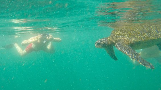 Yeaah, die erste Meeresschildkröte! Wahnsinn!