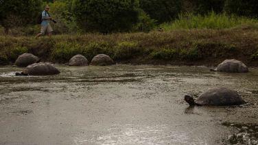 Landschildkröten-Jagd.