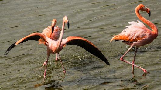 Flamingos tummeln sich in den Lagunen.