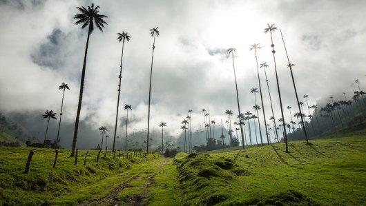 Valle de Cocora mit den höchsten Palmen der Welt.