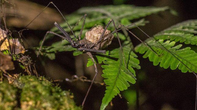 Süss: eine Skorpion-Spinne mit ihren Jungen.