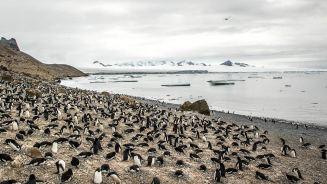Antarktischer Dichtestress.