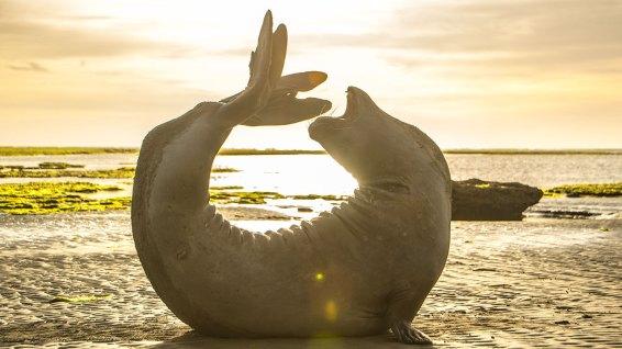 Yoga…