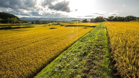 Auch im ganzen Land verbreitet sind die schönen Reis-Terrassen.