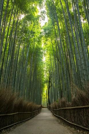 Als Kontrastprogramm ein Bambus-Wald.