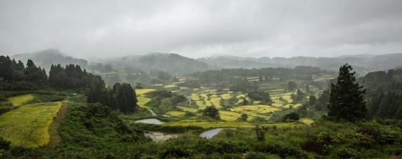 Reis ist in Japan ein Grundnahrungsmittel, daher dominiert Reis die Landwirtschaft.