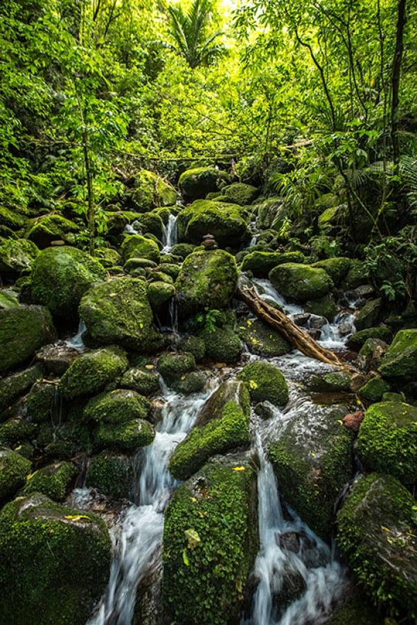 Da, wo es ihn noch gibt, speichert der Wald das Wasser.