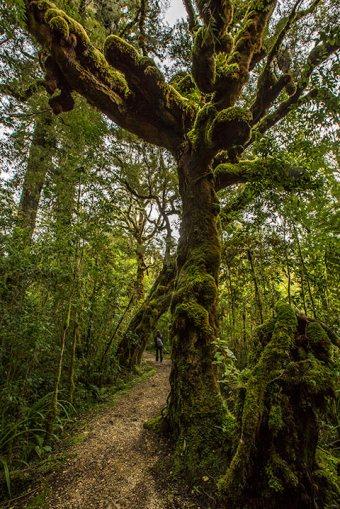 Tolle Wanderung im Oparara Basin…