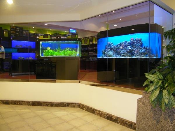 acrylic-fish-tank-016
