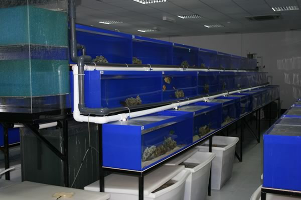 acrylic-fish-tank-028